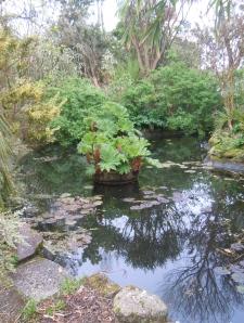 Morrab Gardens: Pond