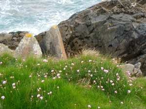 "Wildflowers at the rocky edge of ""The Island"""