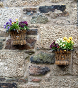Flower pots on a wall